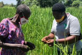 Strengthening Market-led Digital Agriculture Platforms In Malawi